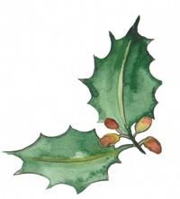 la-sante-par-les-arbres-bruno-miniet-03